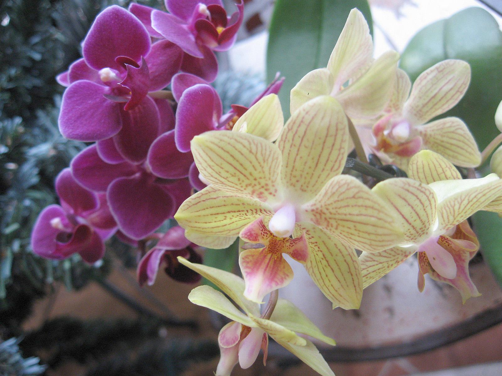 Az orchidea ápolása