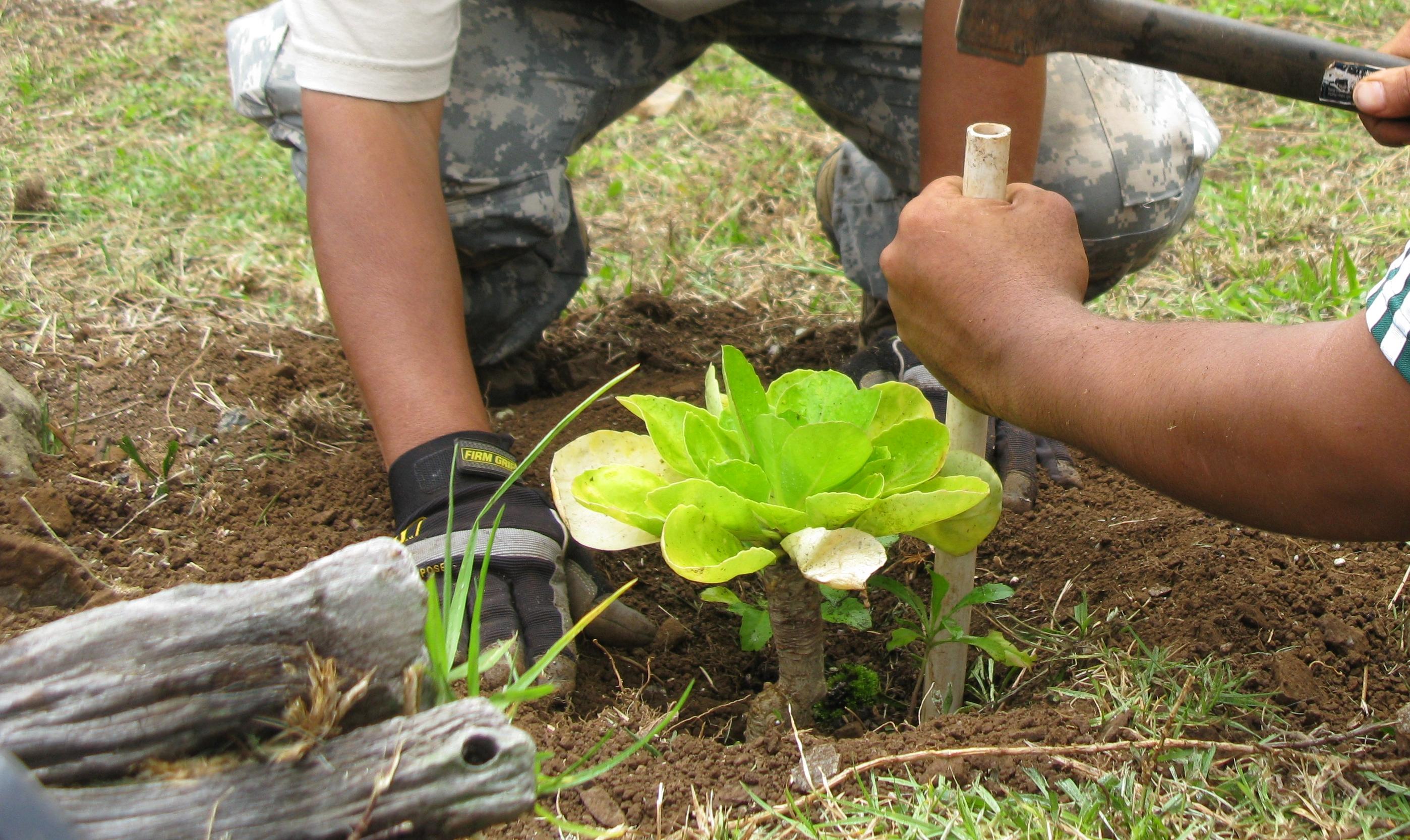 Növényvédelem 1. Nem is olyan rémisztő!