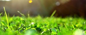 tavaszi-gyepeleszto-program
