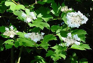 Árnyékkedvelő növények
