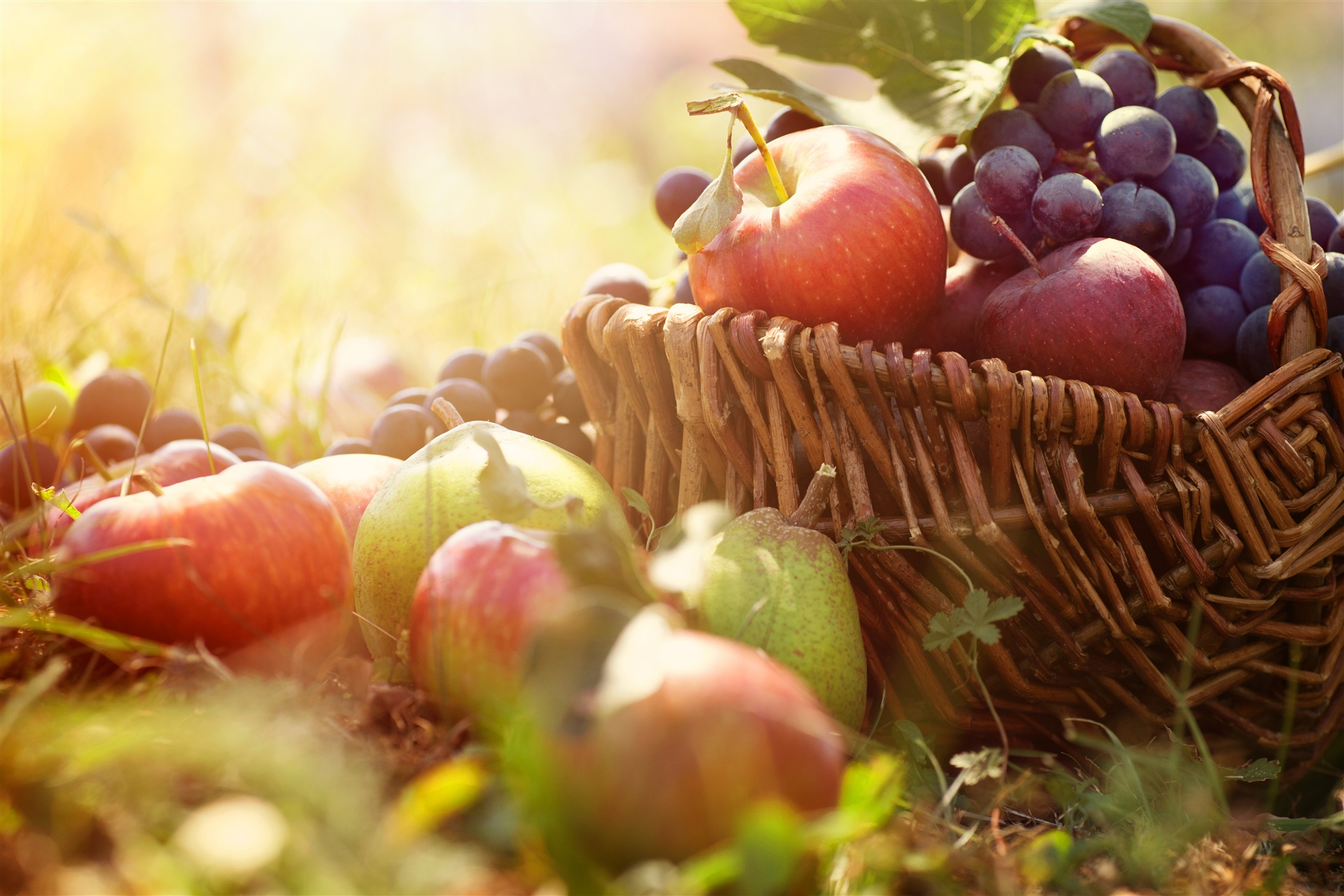 Gyümölcsfa ültetési tippek