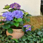 flowerpot-1345371_960_720