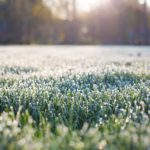 frost-on-grass-1358926_960_720