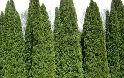 Sövény tippek
