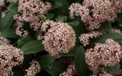 Az emlékezés és a kegyelet virágai