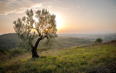 Környezetbarát megoldások a talajlakó kártevők ellen