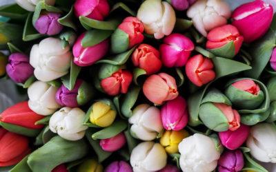 Őszi Virághagyma-Ültetési Tippek
